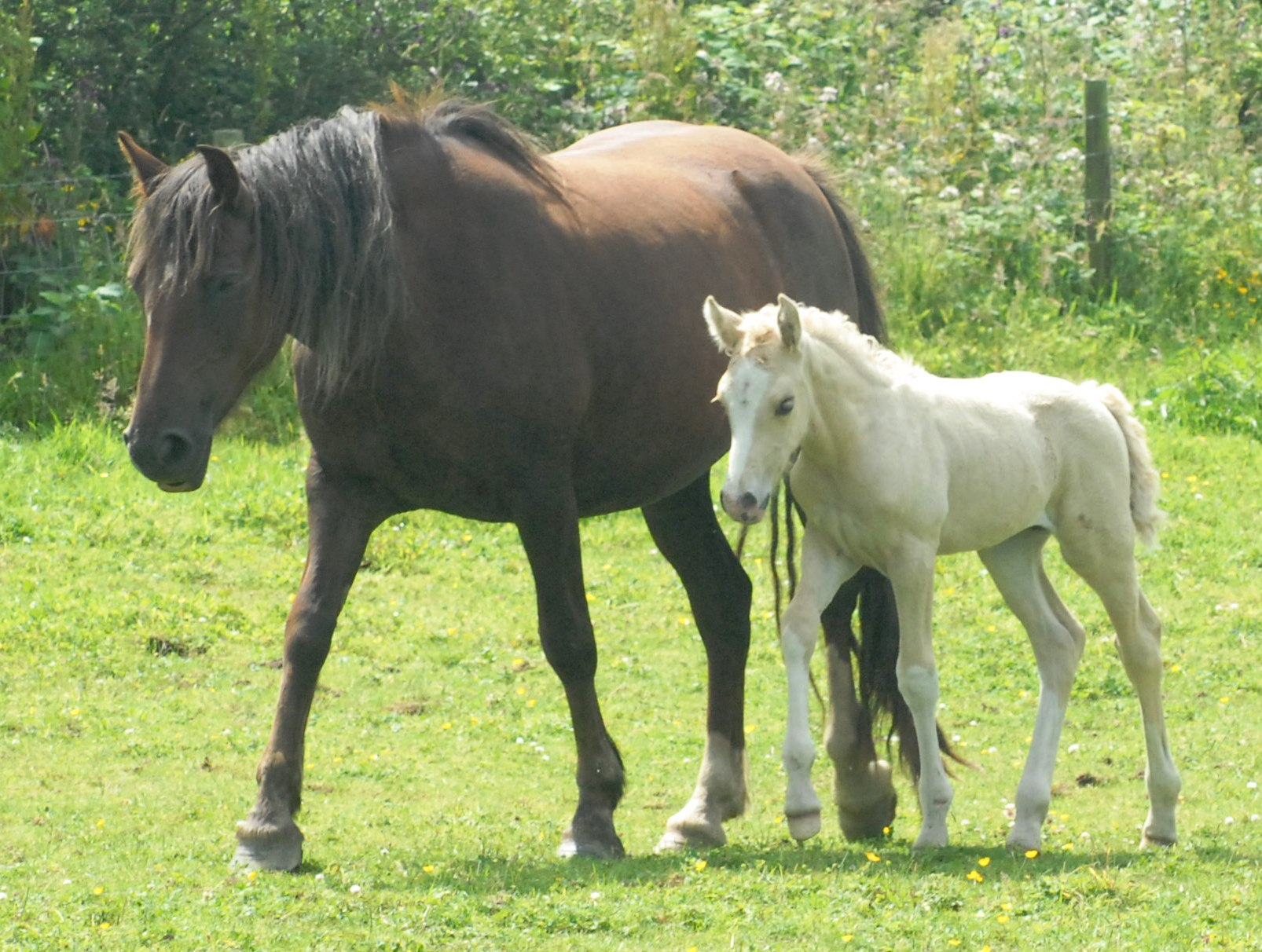 palomino foal - photo #22