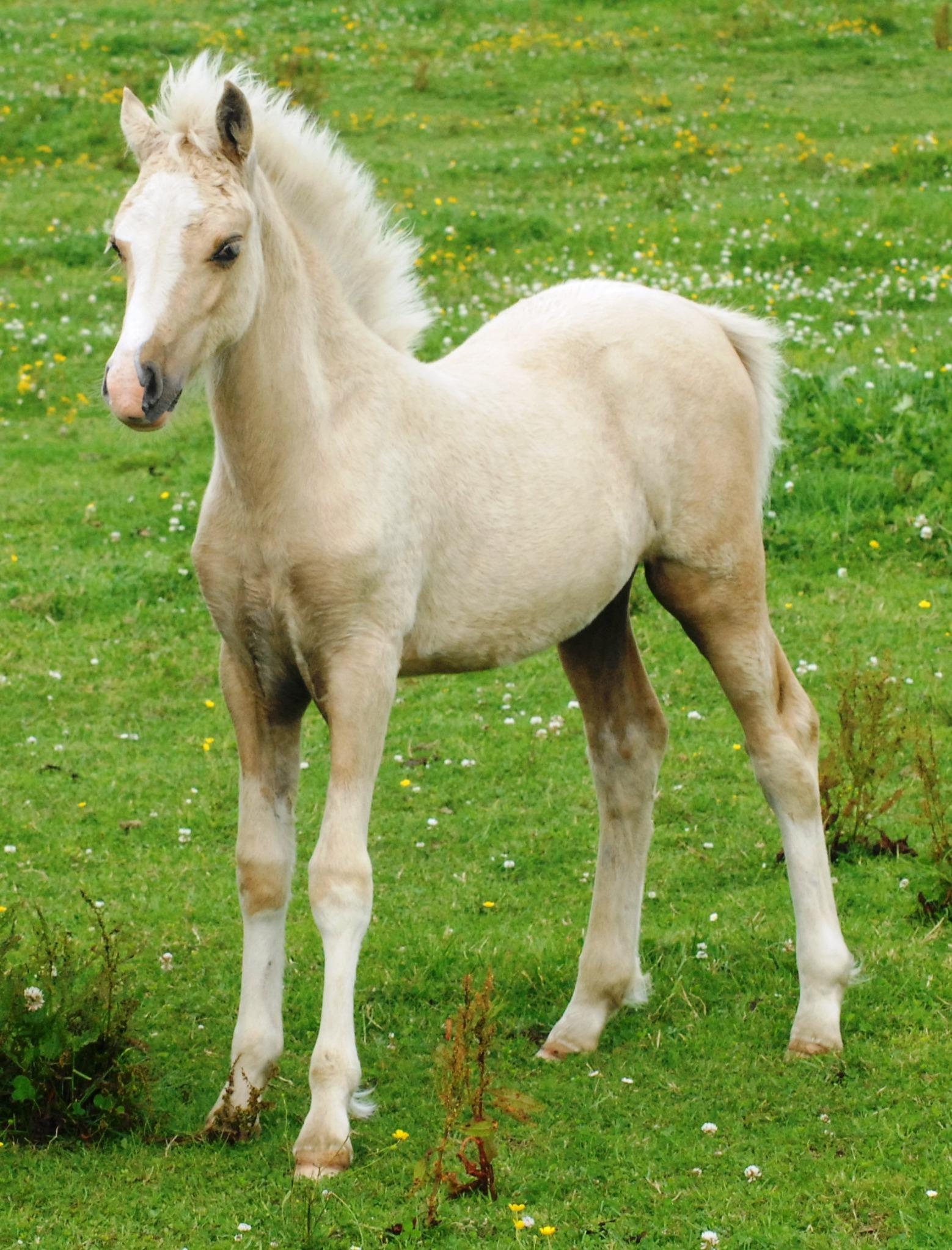 foals - photo #34